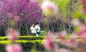 资讯生活郑州:要多种月季和树 少种草 要体现市花月季的种植