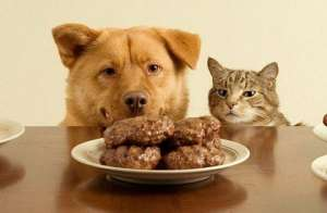 狗狗的七个坏习惯,你家占几个